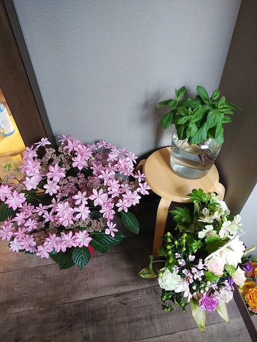 開店お祝いのお花がたくさん!